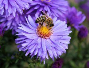 jardín para salvar abejas